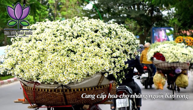 Hoa hong do luoi B400- B350- B275