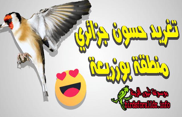 تحميل صوت طائر الحسون mp3