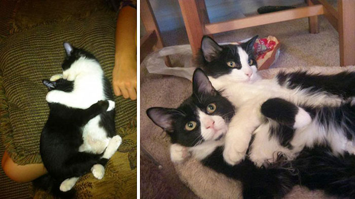50 Heart-Warming Photos of Animals Growing Up Together - 12 Months Apart