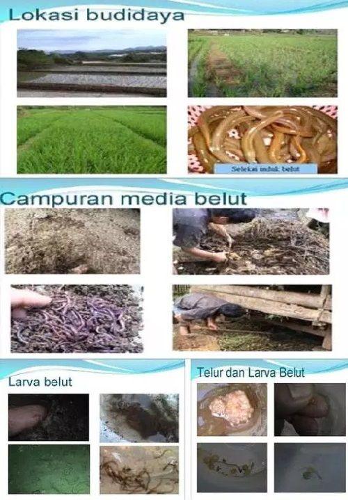 Wadah Budidaya Belut