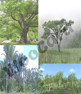 Flora Indonesia Bagian Tengah