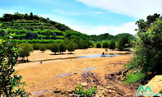 konservasi mangrove di clungup - wisata pantai malang selatan