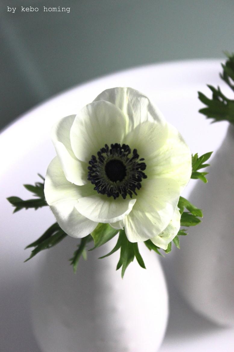 Grünzeug für die Vase, Anemonen und Schleierkraut am Friday Flowerday auf dem Food- und Lifestyleblog kebo homing, Styling & Photography