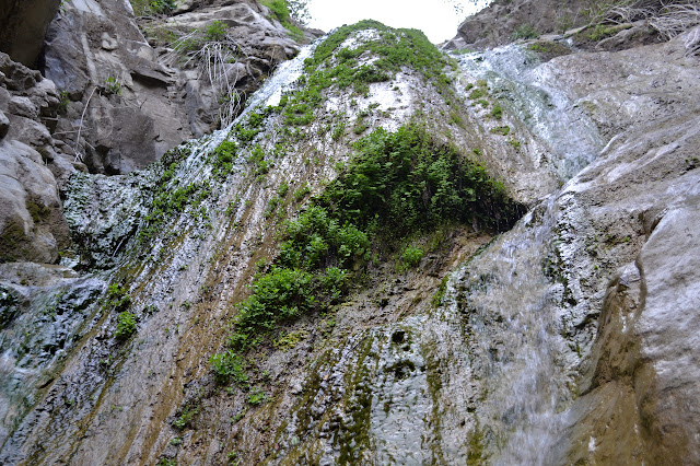 green on the waterfall