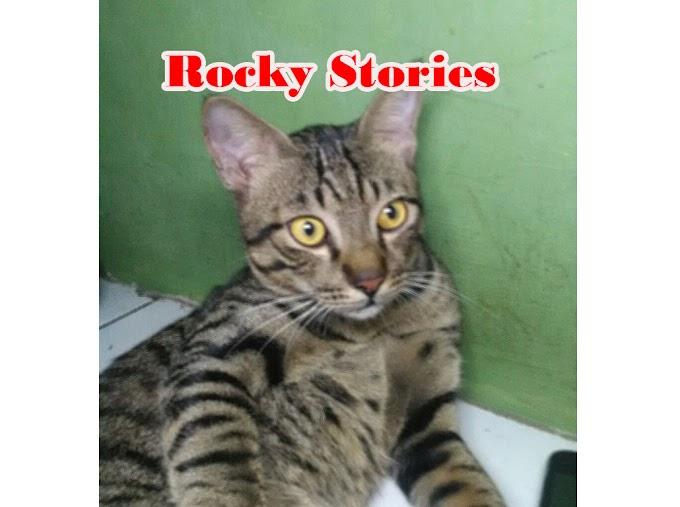 Malam Minggu Absurd [ Rocky Stories ]