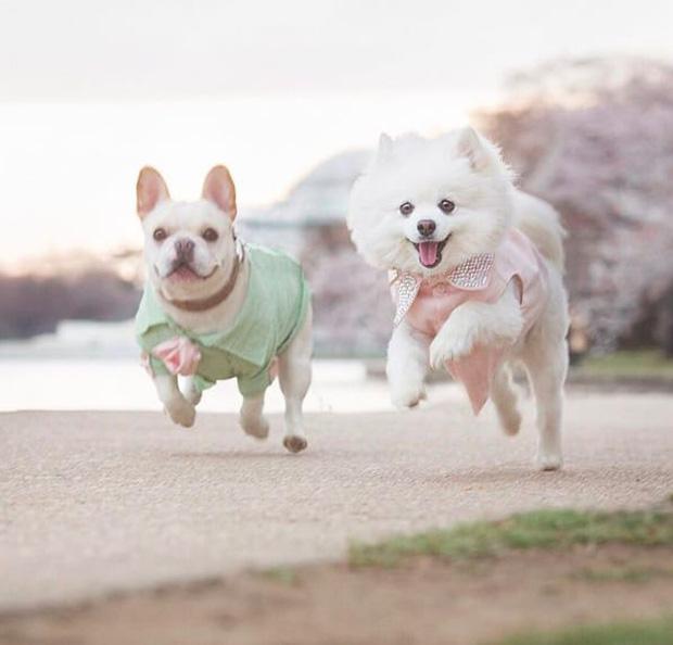 """""""Phát hờn"""" với bộ ảnh cưới siêu lãng mạn của cặp đôi cún cưng"""