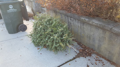 Christmas trees will be picked up during the week of Jan 9