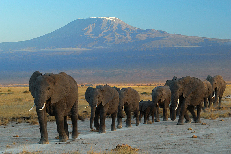 Amboseli Wildlife and Mount Kilimanjaro