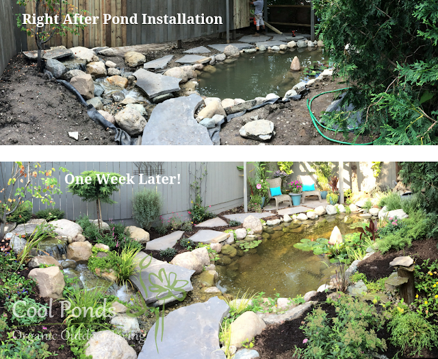 how to finish the edges around a pond