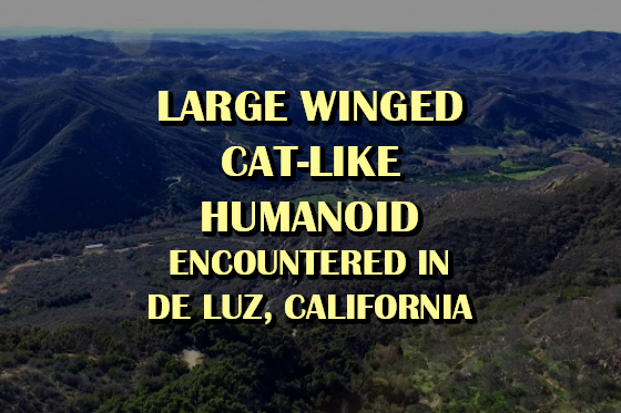 Large Winged Cat-Like Humanoid Encountered in De Luz, California