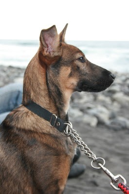 Hund am Strand auf Teneriffa
