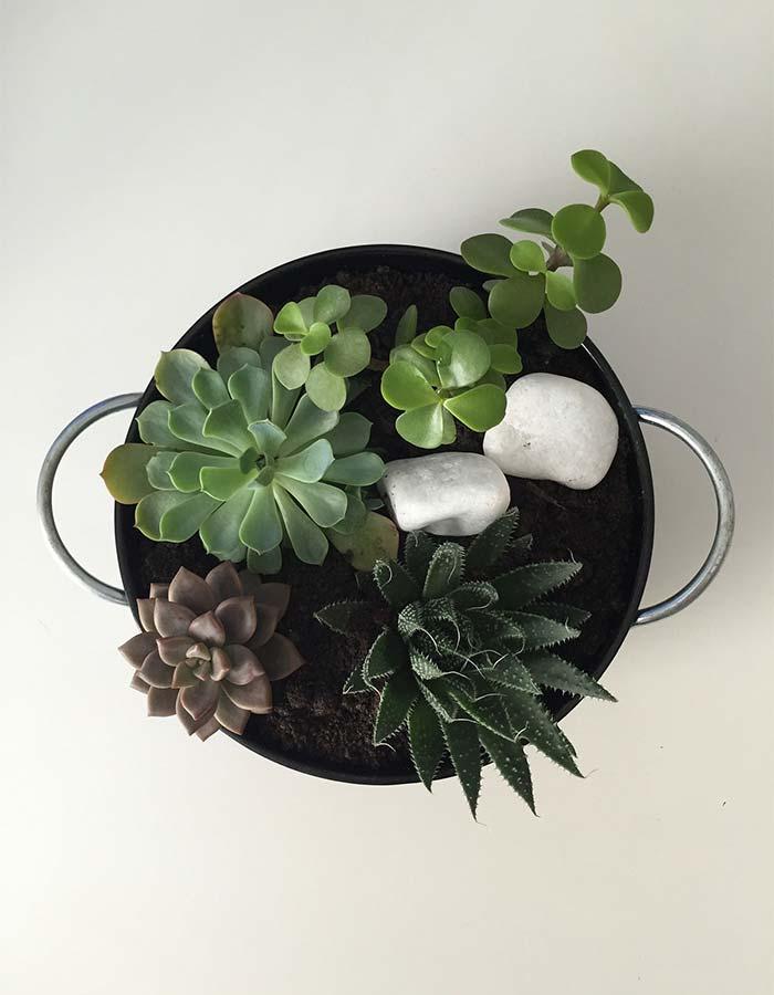 Terrário com várias espécies de suculentas ideal para decoração