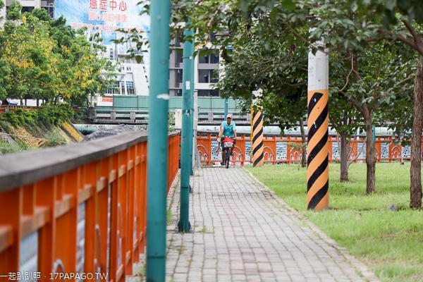 台中大里|興大康橋水岸公園|景觀橋|阿勃勒|落羽松|大里最美河畔