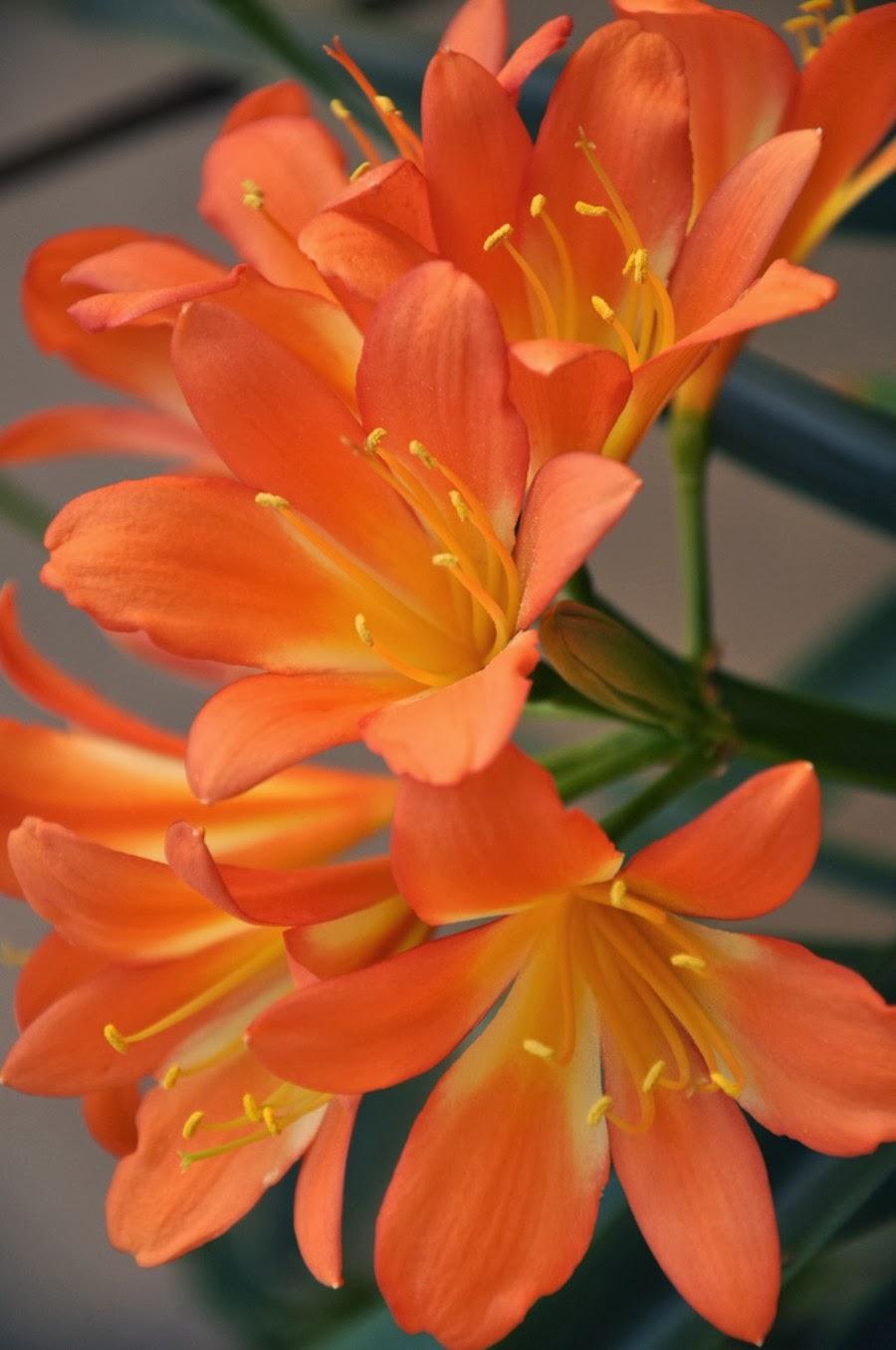 Flowers online 2018 most beautiful flowers wallpapers flowers online izmirmasajfo