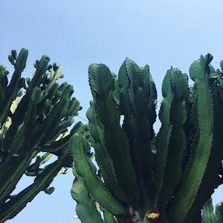Fuengirola kaktukset