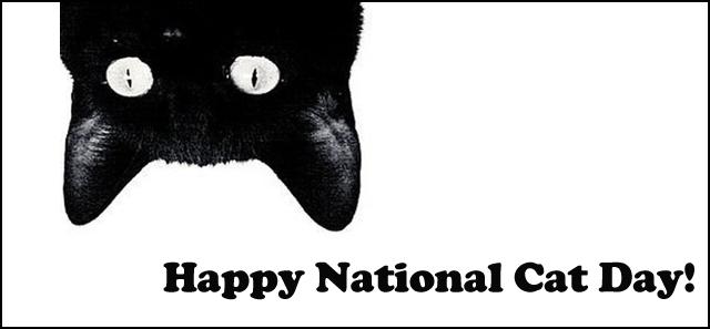 National Cat Day Heidibetts Com
