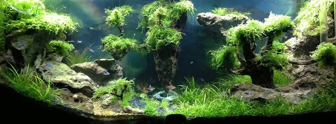 Hồ thủy sinh rừng phong cách Avatar
