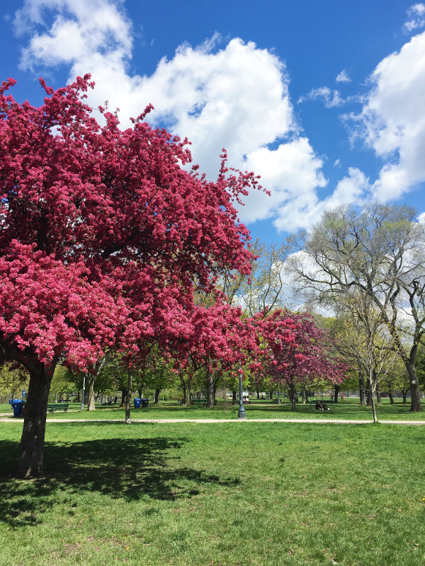 Trinity Bellwoods Park - Spring 2017 - Tori's Pretty Things Blog