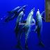 Θαυματό και ασυνήθιστο γεγονός - Δελφίνια έβγαλαν εικόνα της Παναγίας στην ακτή – Δείτε εικόνες