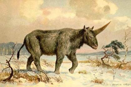 Unicorn Bukan Hewan Mitos Lagi, Pernah Hidup di Dunia