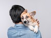Starting a Pet Sitting Business? Here Are Some Effective Tips to Run a Successful One