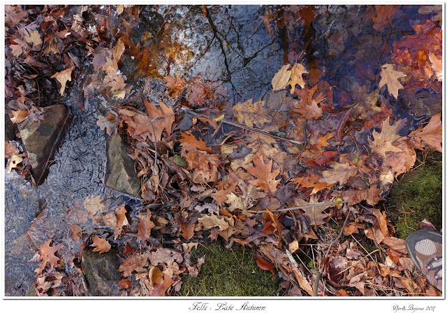 Fells: Late Autumn