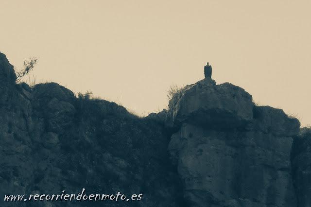 Buitre observandonos en Hoces del río Riaza