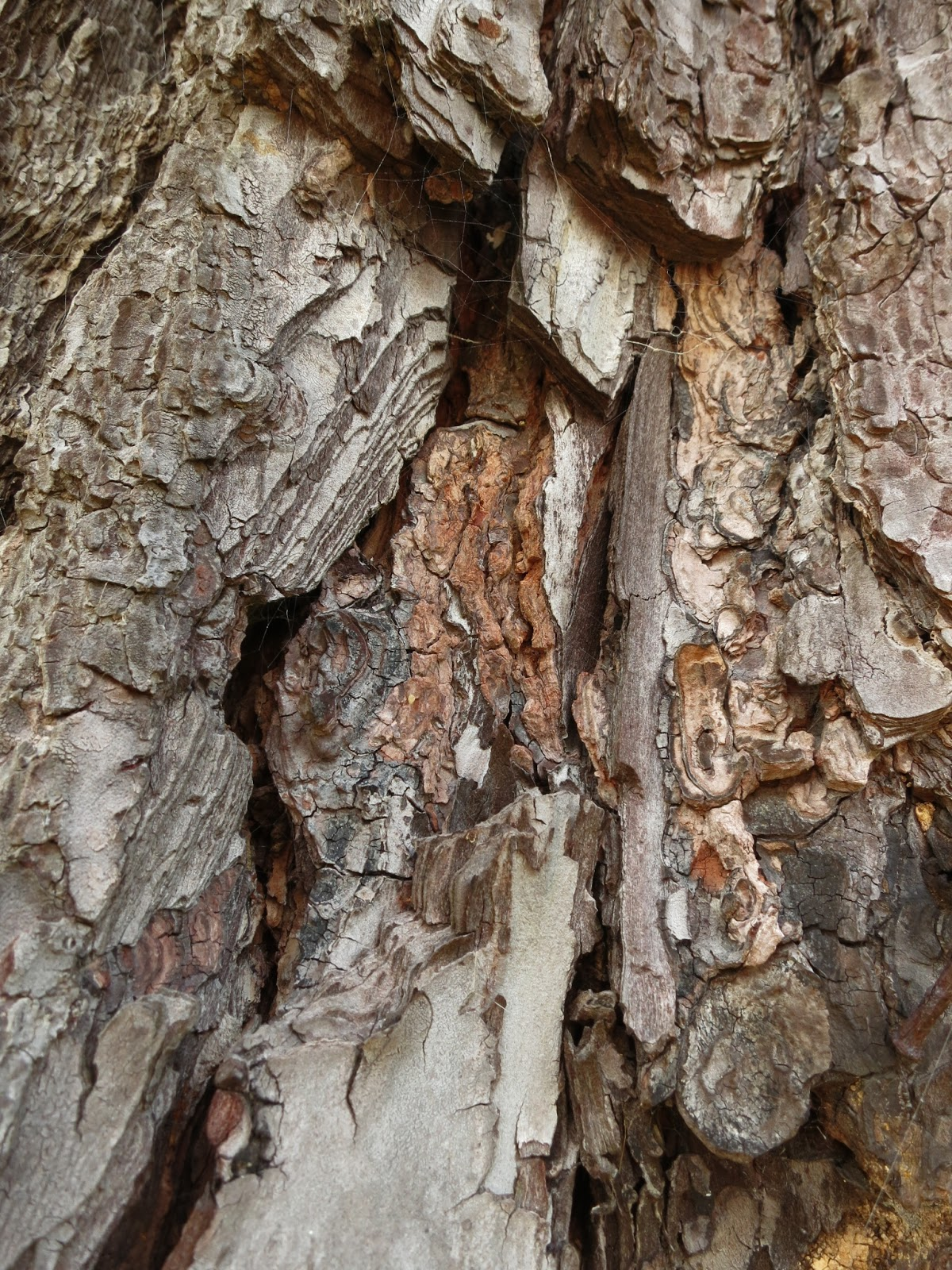 Layers and breaks and colours in bark