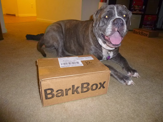 Zoe's Big Dog Barkbox Review - June 2014