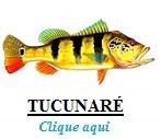 Peixe, Tucunaré