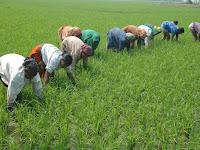 Masalah yang Menimpa Petani Di Indonesia