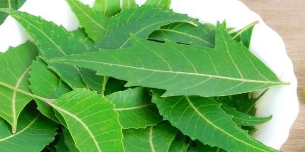 Obat Tradisional Untuk Menyembuhkan Asam Urat Secara Alami