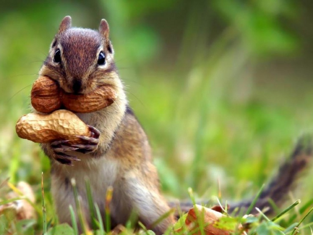 4K Ultra HD Animal Wallpaper Images Biography and India's ... |Indian Squirrel Wallpaper