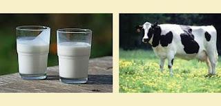 alamat no telepon perusahaan susu sapi, susu kedelai dll di Jkt