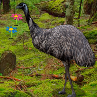 Bigescapegames Big Emu Forest Escape Walkthrough