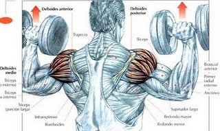 Ejercicio Para Hombros Con Pesas - Aumentar Masa Muscular