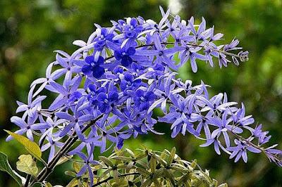 Tukang taman surabaya tanaman rambat vertical garden-