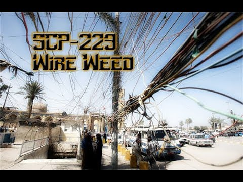 SCP-229 - Wire Weed