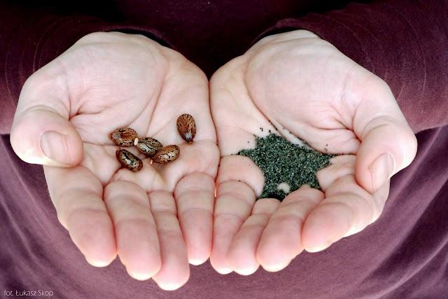 duże i małe nasiona na dłoniach