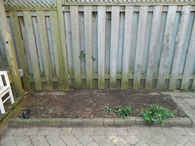 Playter Estates late summer garden clean up after by Toronto Paul Jung Gardening Services