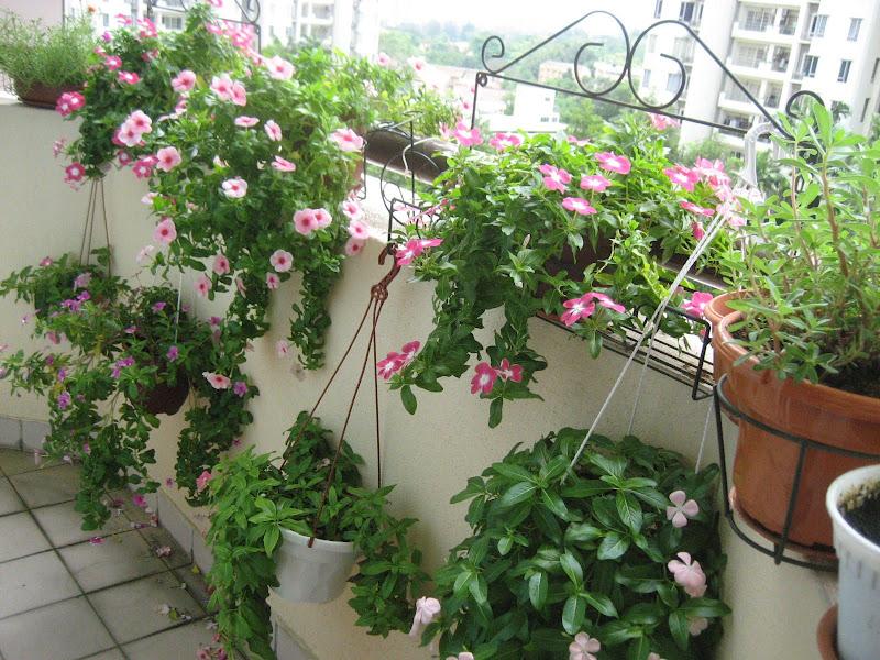 Belly Good Cooking: My Balcony Garden