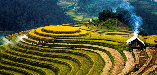 10 Vietnam tourist attractions in the most prestigious tourism ranking in the world 1