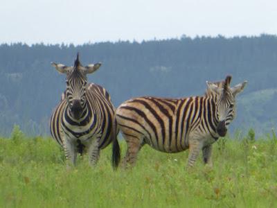 Viaje a Suazilandia, 2º parte. Que ver en este país - Blog Viajar fácil y barato
