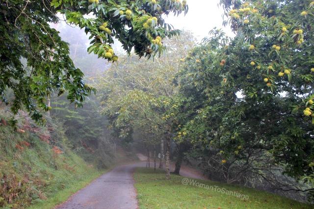 negreira-camino-de-santiago-fisterra-castaneiros