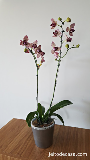 orquidea-decoração-casa