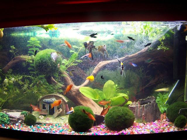 Zakładamy własne akwarium z rybkami