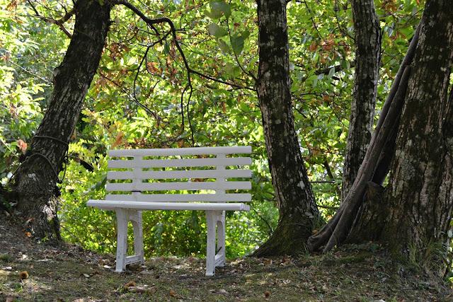 Panchina nei boschi