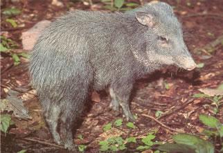 Fauna da Costa Rica