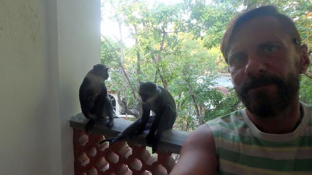 taras z małpami