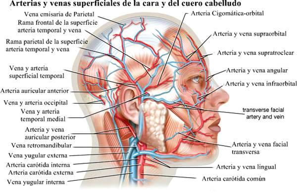Anatomía a nivel macroscópico y microscópico - Nomenclatura anatómica